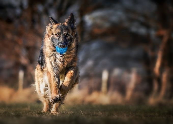 Ball boy by jennycameron - Only Pets Photo Contest