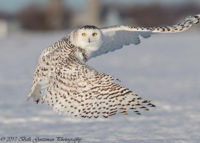 Charlie by BethGoetzman - Winter Wildlife Photo Contest