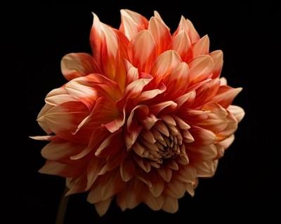 Floral Sadness 1002