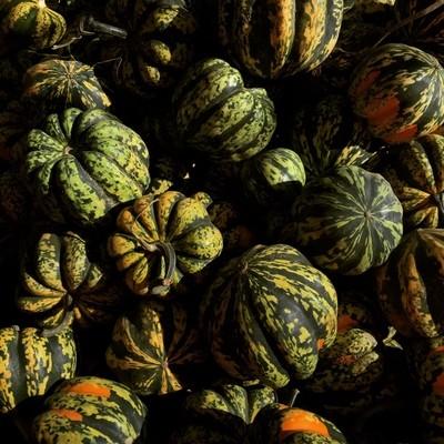 Acorn squash farmers market