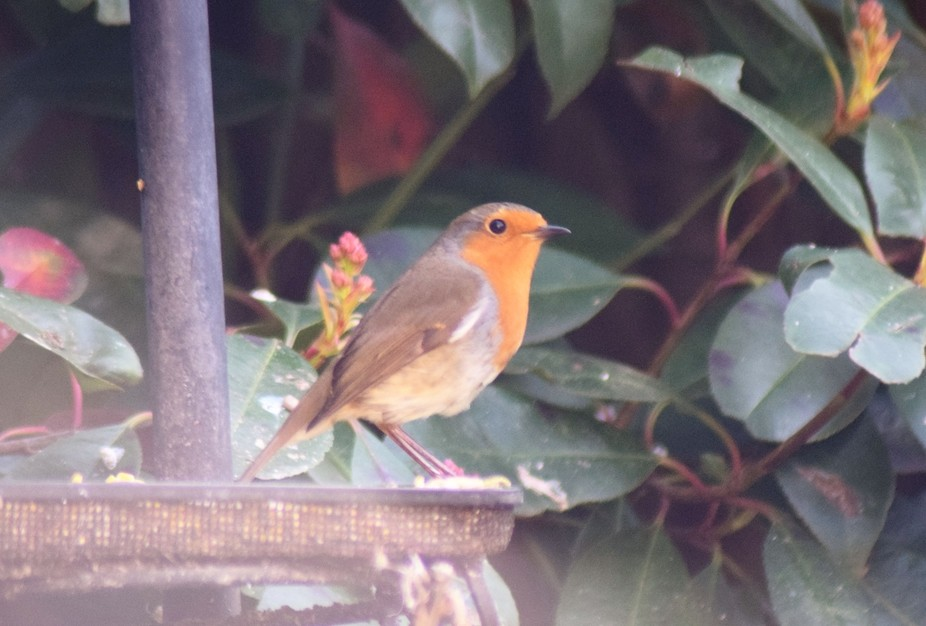 This cheeky chappie has taken up refuge in one of the nesting boxes we have in our garden; and we...