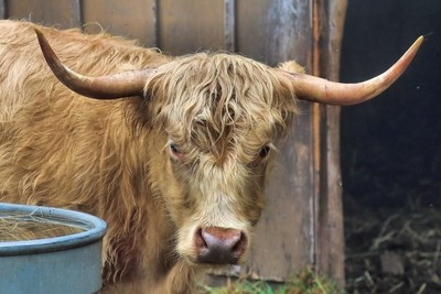 Horns & Hair    IMG_1436