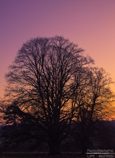 PhotoSynthetic- Isolating the tree, with pastel sunset