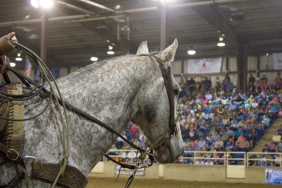 This gelding was tall and lanky and not very easy on the eyes, but he was the absolute best at hi...