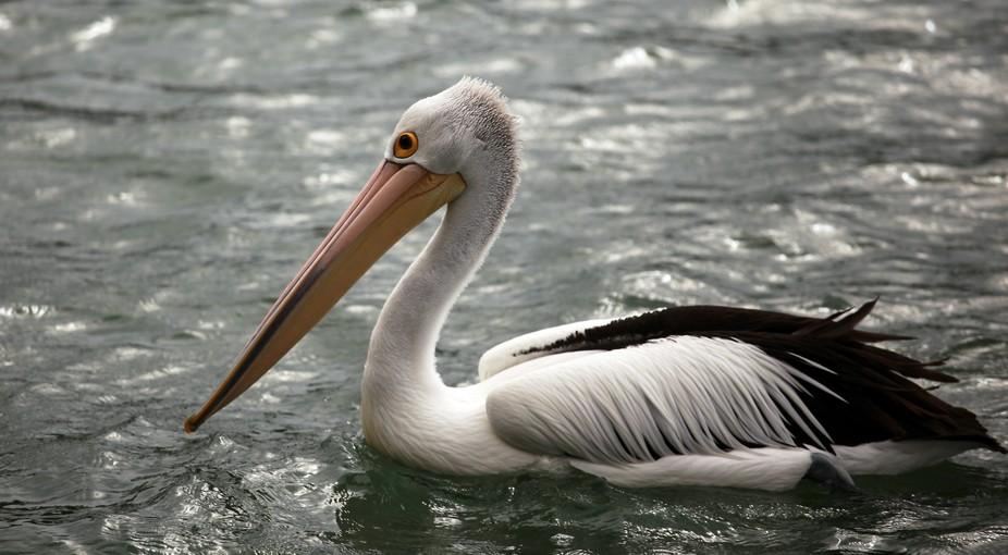 Pelican 04 mod