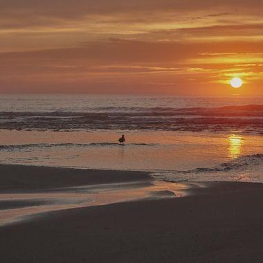 cape cod sun rise