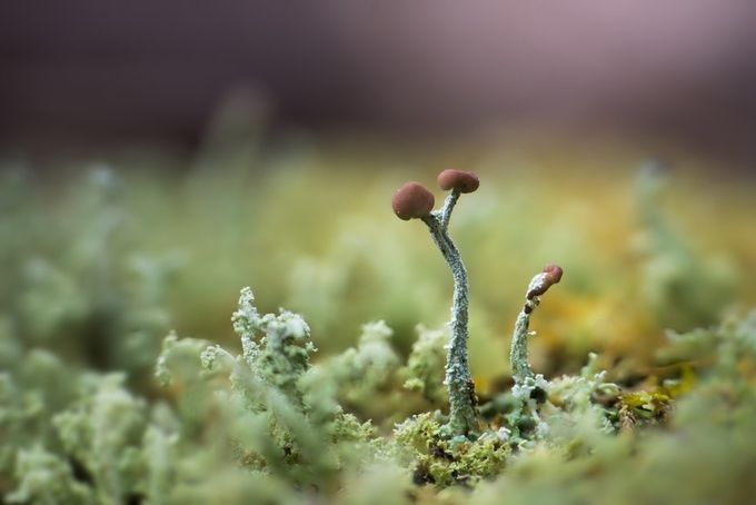 lichen by kjoya - Depth In Nature Photo Contest