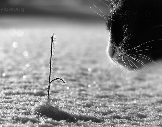 Yes... it is frozen :) by ellu - Monochrome Creative Compositions Photo Contest