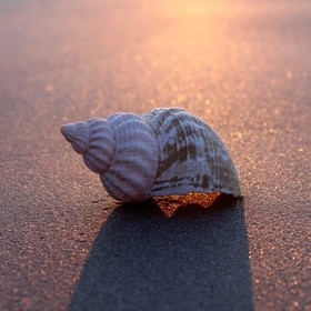 A Dog Whelk on smooth sand and lit only by the setting sun.