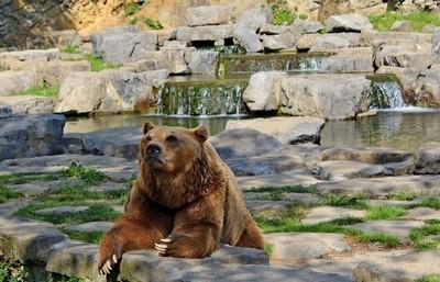 Belgium Bear Welcoming Visitors