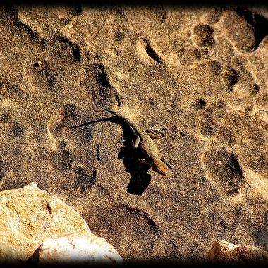 Little Creature at Cave Springs, Canyonlands in Utah.