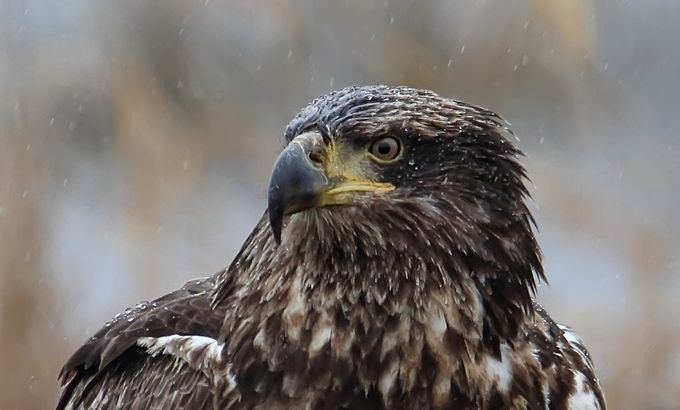 Wet Feathers by Jekawrig - Rain Photo Contest