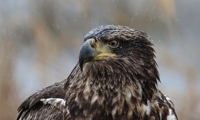 Wet Feathers
