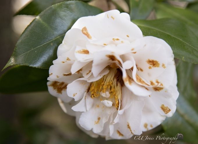 Spring has come early to the South. Photo taken at Magnolia Plantation located in Charleston, SC. February 2017