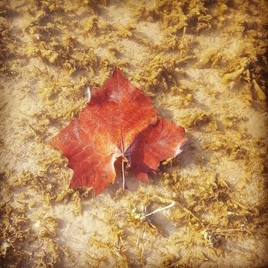 This leaf was floating in the lake when we were fishing.