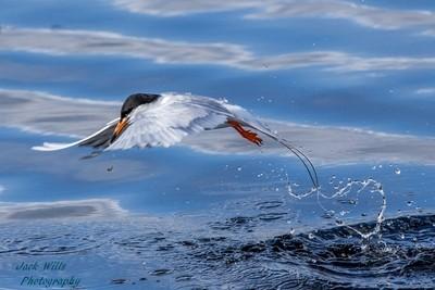 Klamath Tern Fishing (1 of 1)