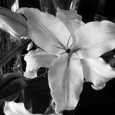 Lilies (B & W)