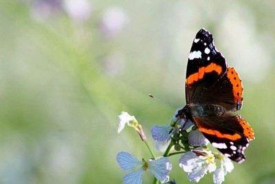 A Butterfly poses while I take his photo from a distance.