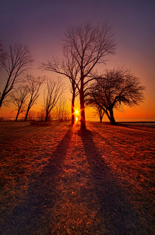 As Sure As The Sun Will Rise by phil1 - Tree Silhouettes Photo Contest