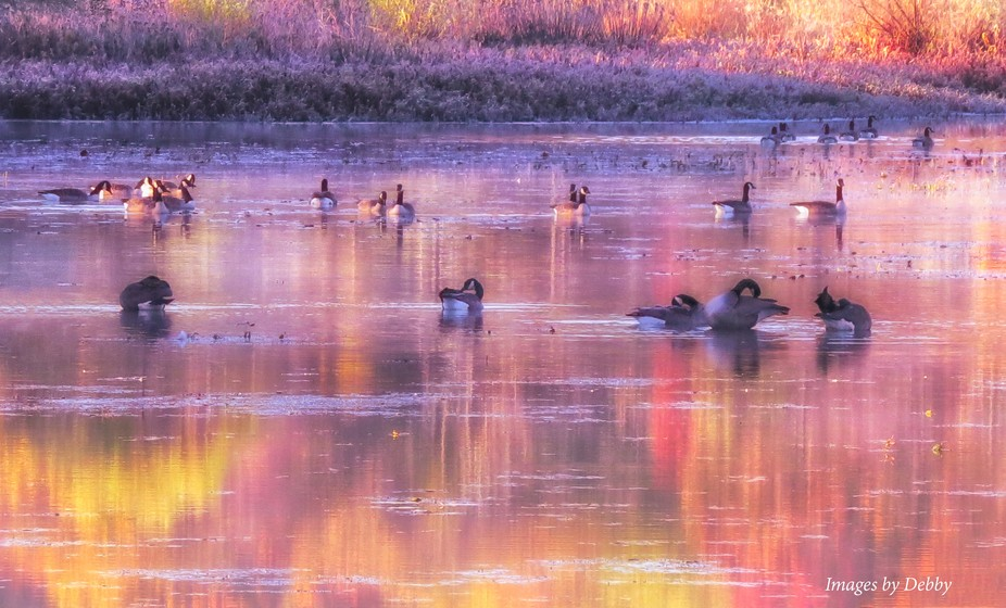Fall - geese at Moraine