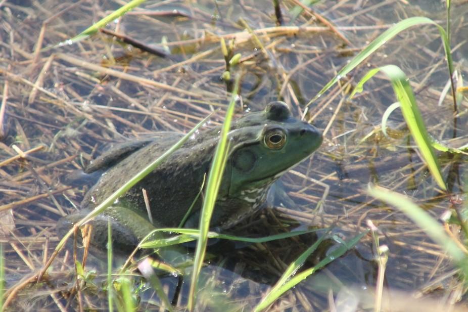 Taken at a pond in Missouri