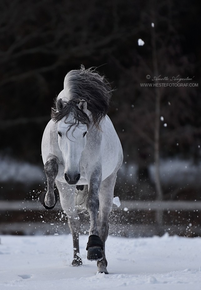 Charge! by SerenataPhotography - Fast Photo Contest