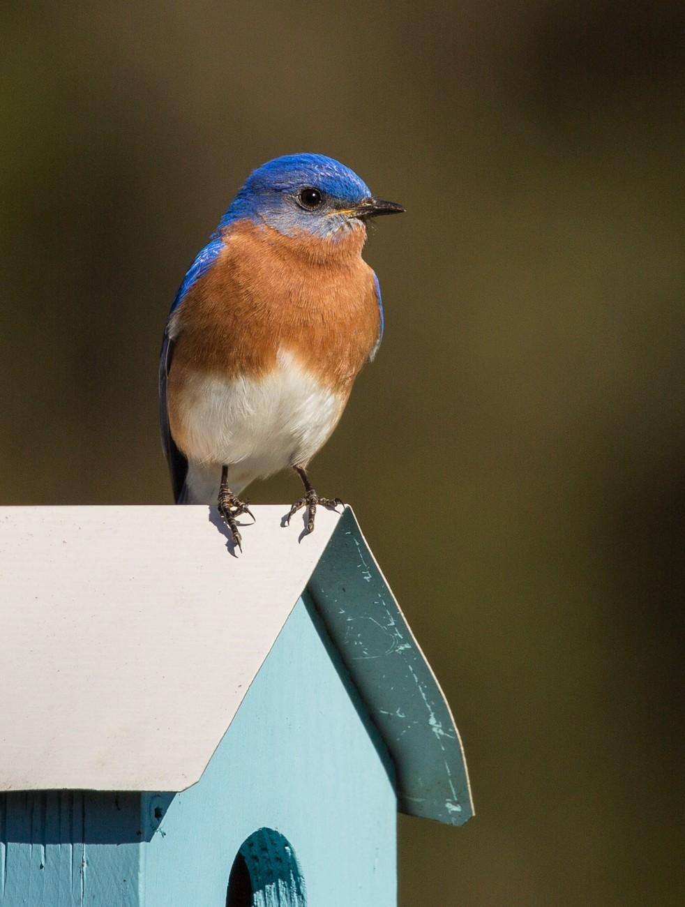 Bluebird on light blue birdhouse