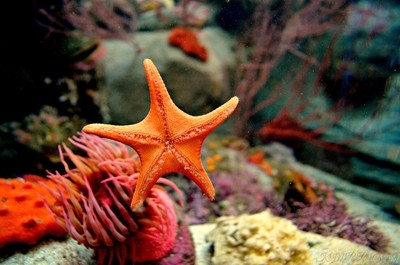 Looks like the starfish from Finding Nemo