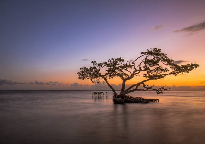 Bonsai in the water. by Alfredo_Jose - A Lonely Tree Photo Contest