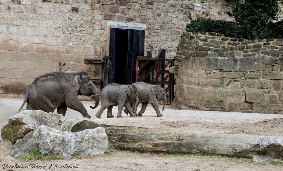 Babies at Chester Zoo