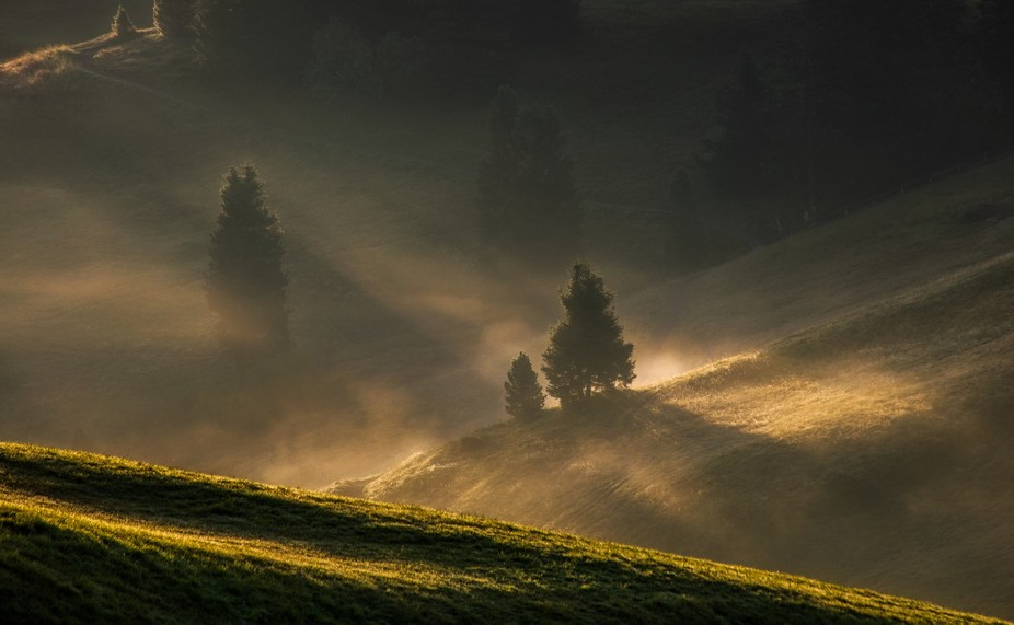The Golden Grass of South Tyrol.