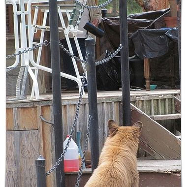 Taken from my mom's house. This bear walked right up the neighbors porch.