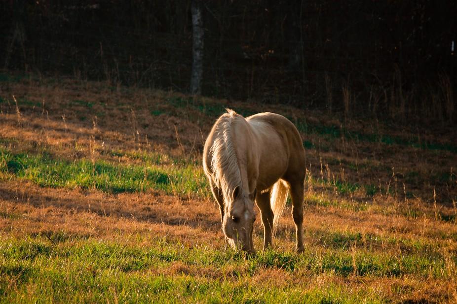 Bonanza Roman, retired working cow horse gelding, my big baby and ever patient model.