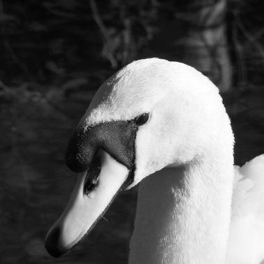 Meet Mrs Swan