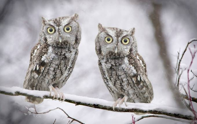 Two Owls by richardmangan - Compositions 101 Photo Contest vol4
