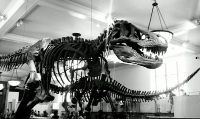 Black and White T-Rex