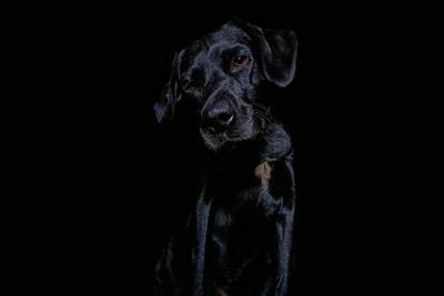 monty black2 (1)