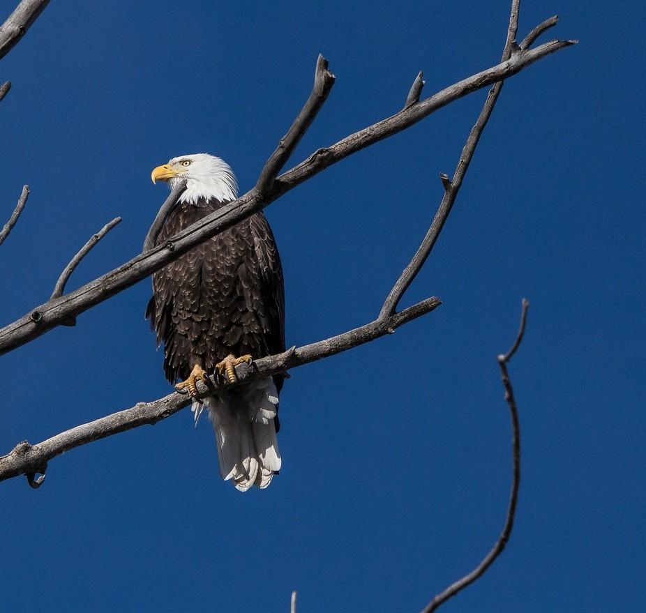 Early morning Eagle