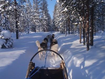 Lapland-Husky Ride