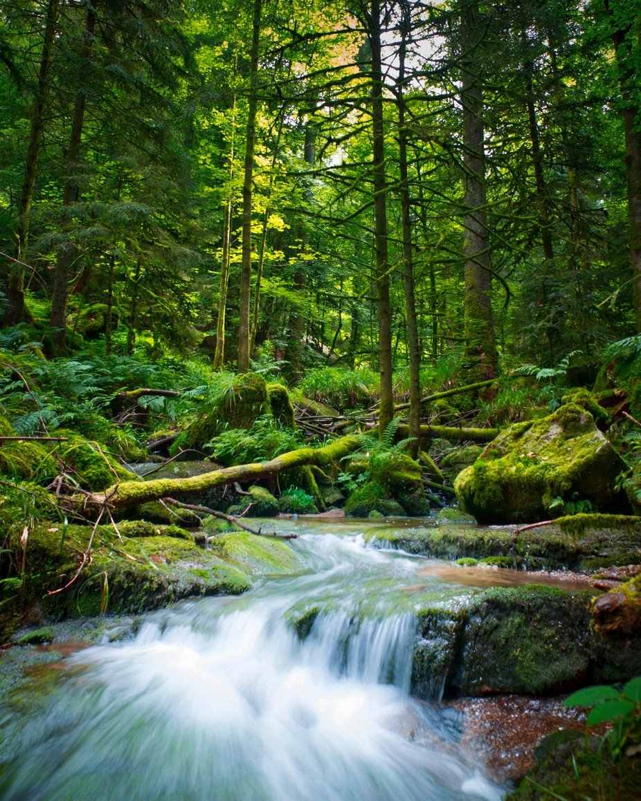 Schwarzwald Greenery by RobAtkinsonPhoto - Depth In Nature Photo Contest