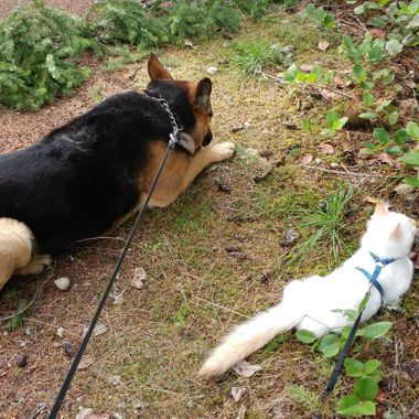 Pheebs & Maggs resting a moment on walk in Coombs - 6 Oct 2016