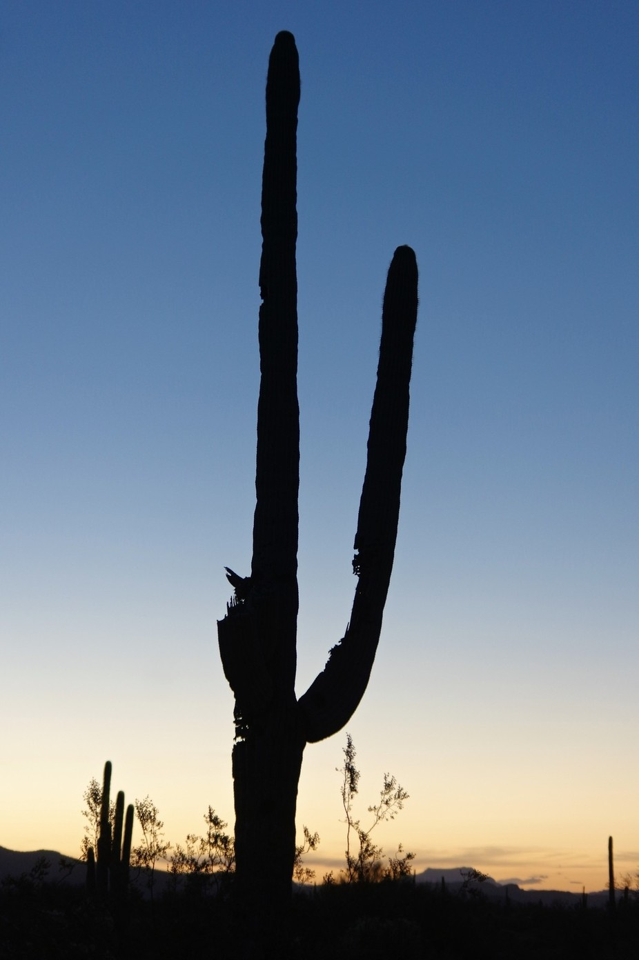 Took this shot early this morning in Gold Canyon Arizona right before sunrise