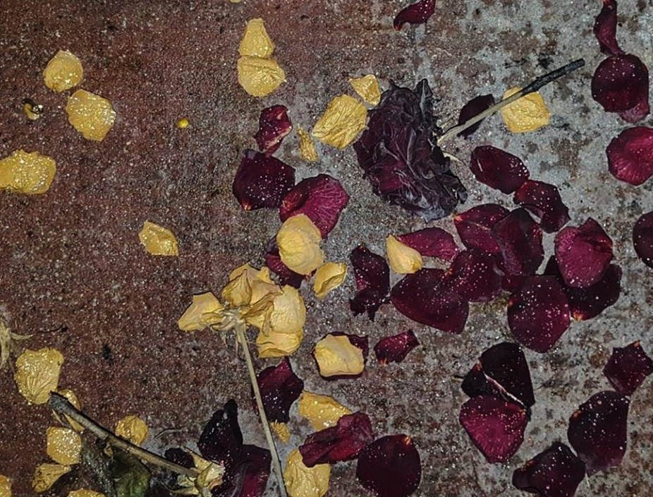 crushed roses