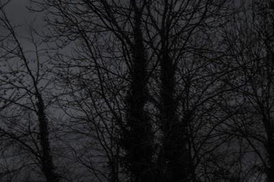 trees in sillhouette