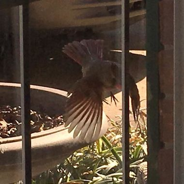 Cardinal attacking window