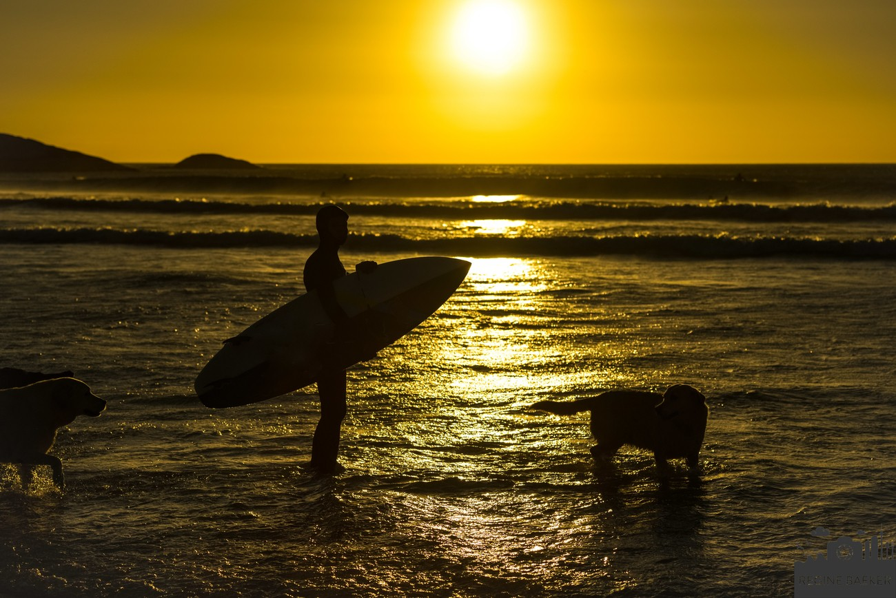 Surferboy with dogs during sunset-I met them in Southafrica at Llandondno Beach near Capetown