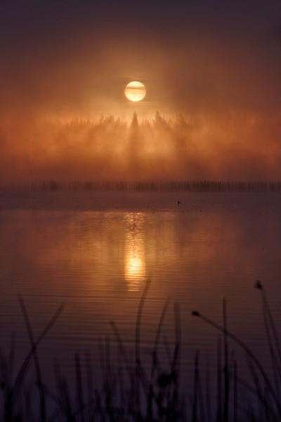Misty Morning Silence