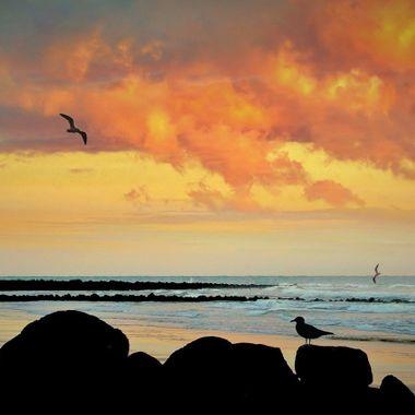 Near Tannum Sands, SE Queensland, Australia.
