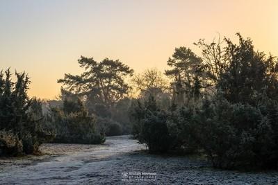 Cold Juniper Sunrise