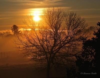 Morning Has Broken........